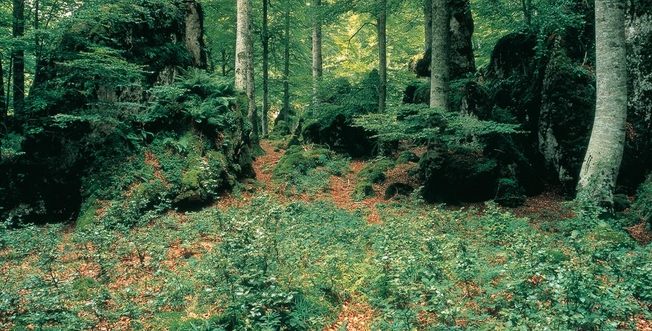 Bosque Navarra Bajamar